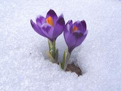 croquos-flower