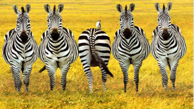 be-different-zebras